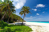Tropical scene — Stock Photo