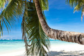 Beautiful palm on beach — Stock Photo