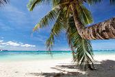 Piękne palmy — Zdjęcie stockowe