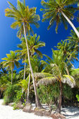 Idyllic tropical scene — Stock Photo