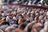 Oysters, mussels and scallops on market — Stock Photo