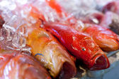 Fresh seafood in asian market — Stock Photo