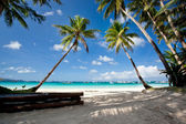Tropical scene — Stock Photo