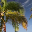 Stock Video: Palm crone on blue sky background