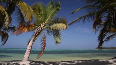 Caribbean coastline with white sand — Vidéo