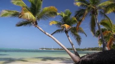 Caribbean coastline with white sand — Stock Video