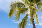 Palm tree on sky background — Stock Photo