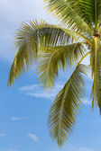 Palm tree on sky background — Stok fotoğraf