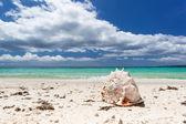 Seashell on beach — Stock Photo