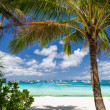 Tropical beach with beautiful palm — Stock Photo