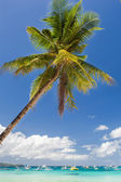 Tropical beach with beautiful palm and white sand — Stock Photo
