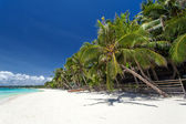 Tropical coastline with beautiful palm and white sand — Zdjęcie stockowe
