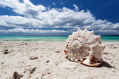 Seashell on tropical beach — Stock Photo