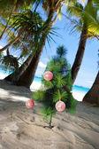 Julgran på stranden — Stockfoto
