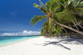 Beautiful palm on beach with white sand — Foto de Stock