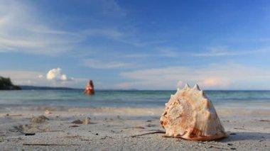 Seashell and girl in bikini on tropical beach — Stock Video
