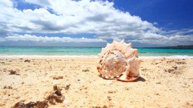 Seashell on tropical beach, Boracay — Stock Video