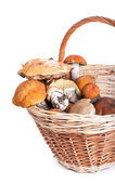 Basket with different mushrooms from forest — Stock Photo