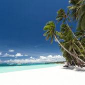 Tropischer strand mit palmen und weißem sand — Stockfoto