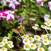 Butterfly in the garden — Stock Photo