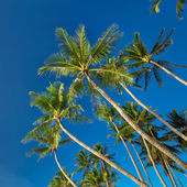 Top of palm tree on blue sky background — Stock Photo