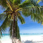 Beautiful palm on white beach, Boracay island — Stock Photo