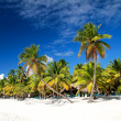 Palms on caribbean sea — Stock Photo #40477459