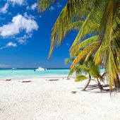 Caribbean paradise — Stock Photo