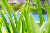 Green tropical leafs — Stock Photo