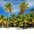 Stock Photo: Palms on beach