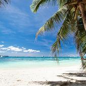 Beautiful palm — Stock Photo