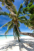 Beautiful palm on white beach, Boracay island — Foto Stock