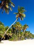 Coconut palms on white sandy beach — Stock Photo