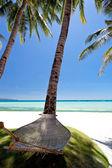 Empty hammock near coconut palms  — Stock Photo
