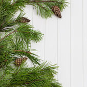 Spruce tree branches frame, evergreen garland — Photo