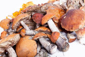 Collection of delicious edible mushrooms  — Zdjęcie stockowe