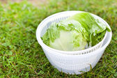 Lettuce salad in spinner — Photo