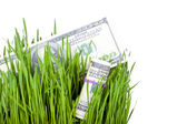 Growing Money in grass — Stock Photo