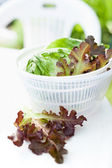 Lettuce salad in spinner — Foto de Stock