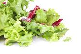 Listovým salátem — Stock fotografie