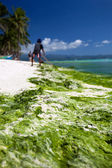 Seaweed in turquoise sea, water plant on Boracay island — Stock Photo
