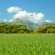 Green grass — Stockfoto #23132318