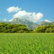 green gras — Stockfoto