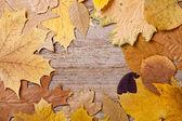 осенние листья над деревянными фоне — Стоковое фото