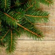 Fir tree on rustic wooden board — Stock Photo