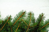 Fir tree on white wooden board — Stock Photo