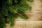 Fir tree on rustic wooden board — 图库照片