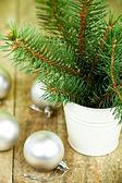 Decoraciones de la navidad del abeto blanco y árbol — Foto de Stock