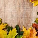 Autumn leaves — Stock Photo #16319567
