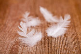 White downy feathers — Stock Photo